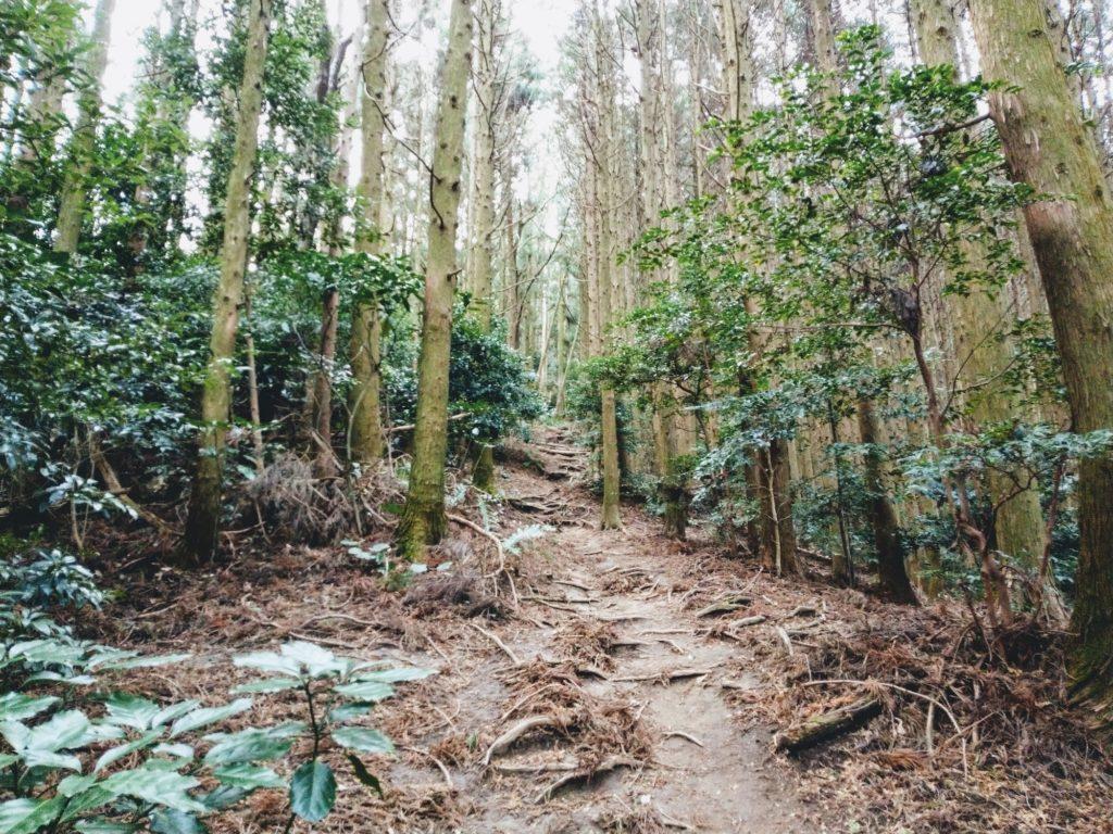 十坊山の登山道