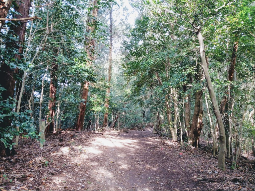 可也山の尾根道