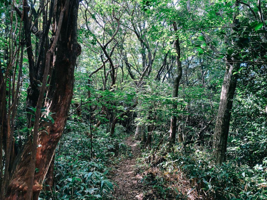 井原山の自然林