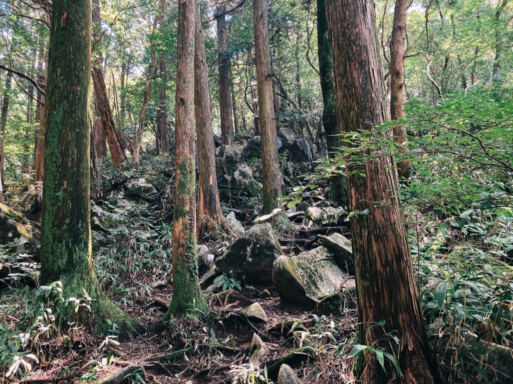 井原山の石灰岩露出地帯