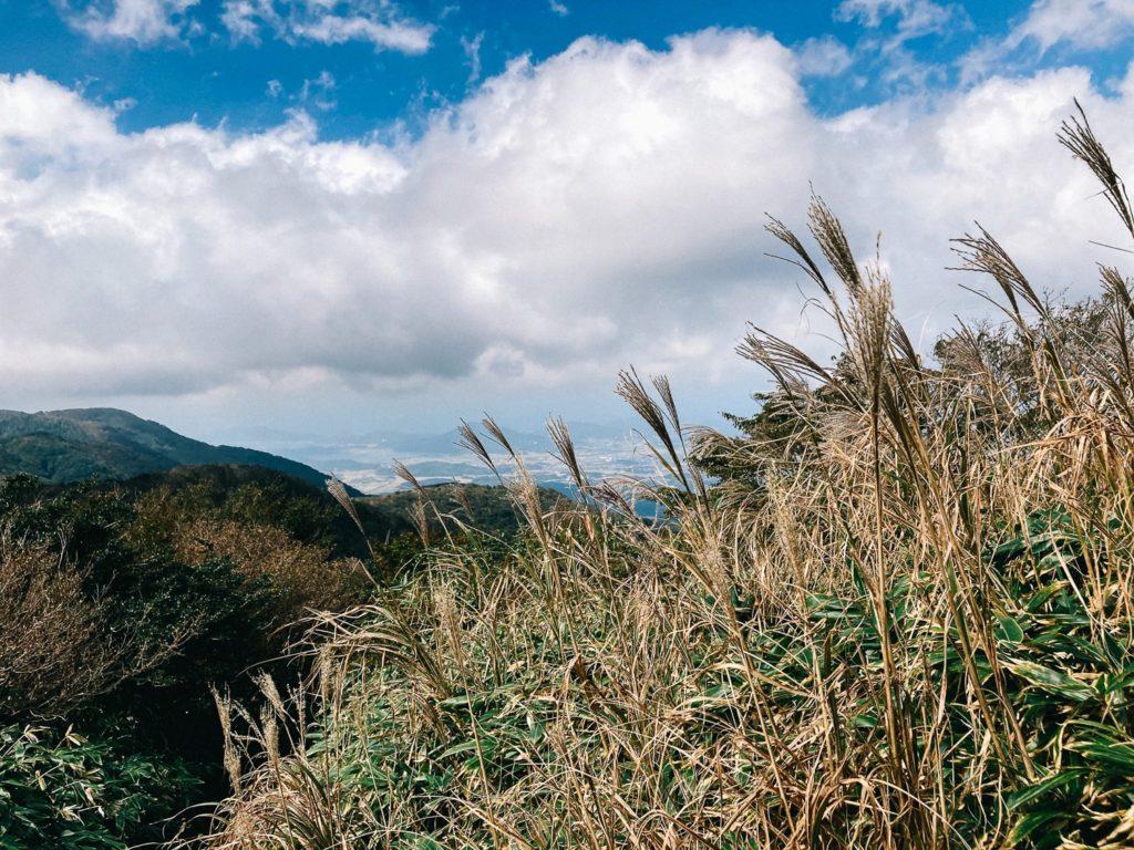 井原山のススキ