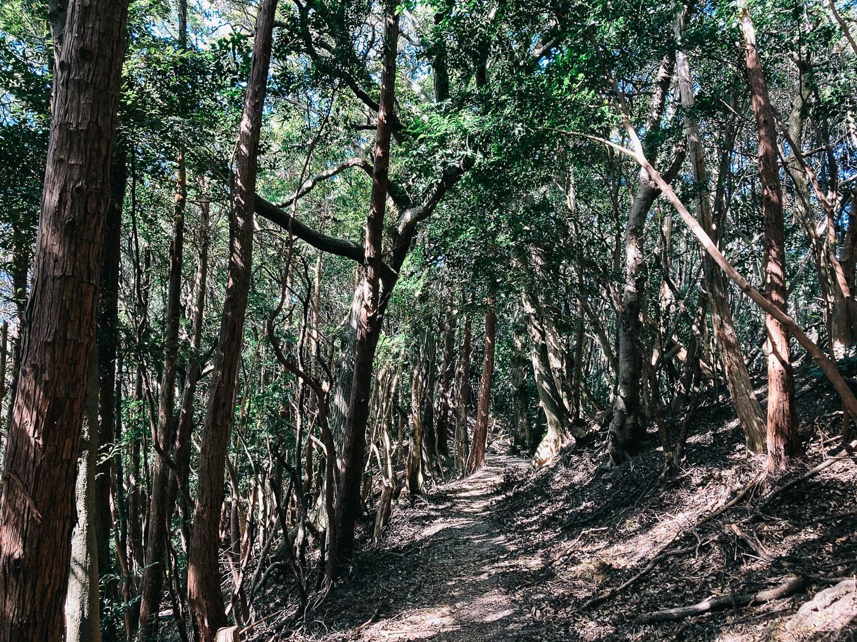 高祖山までのトレイル