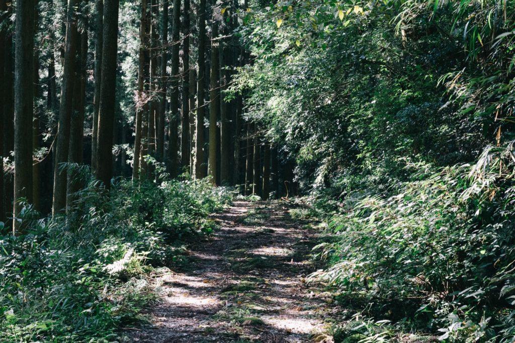 最初の林道