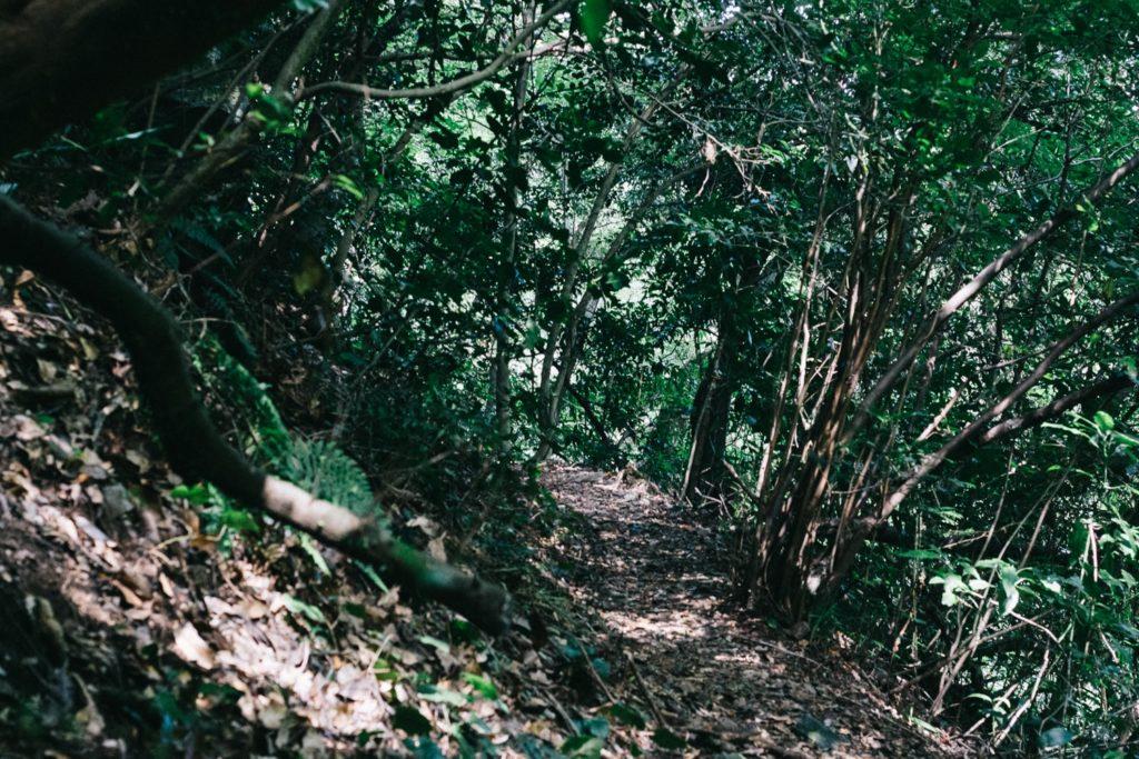 井原山の登山道