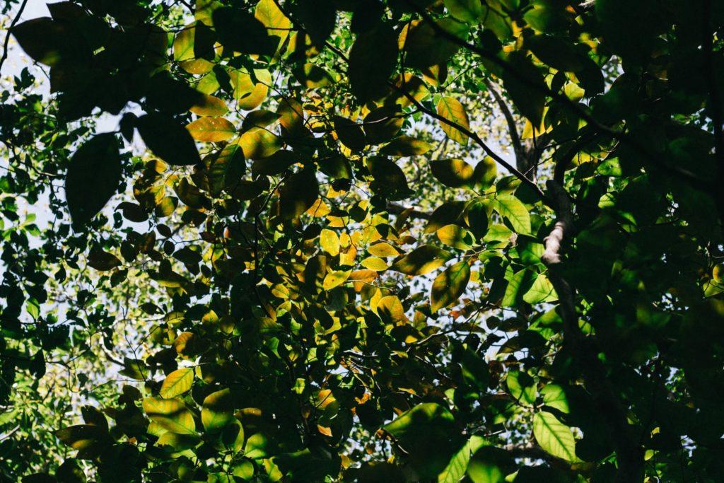 井原山の樹木
